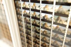 Annapurna Pictures Installation