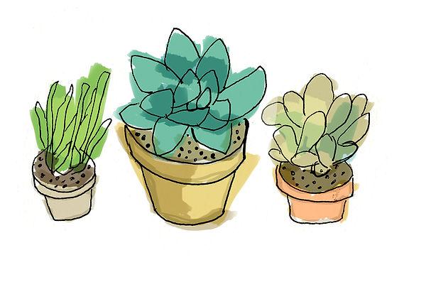 jdprints_succulents2.jpg