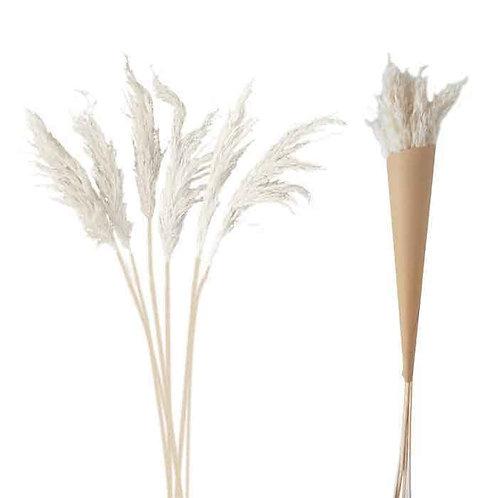 פמפס לבן  100cm (3 יח')