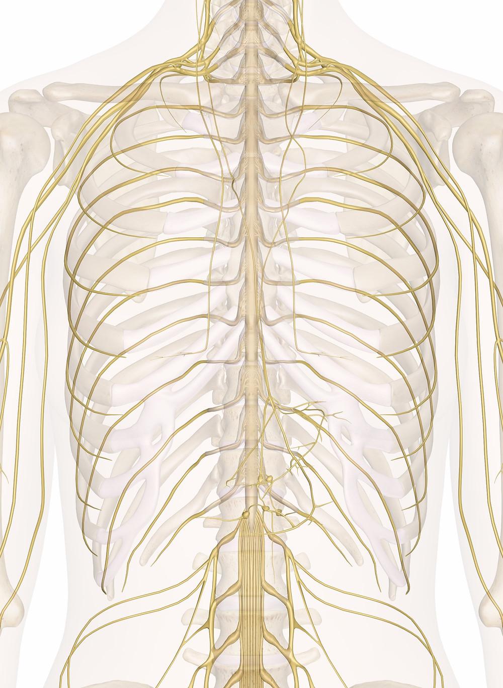 ribcage pain