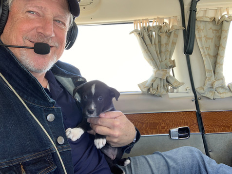 Puppies on a Plane