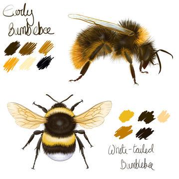 Sketchbook page of Bees