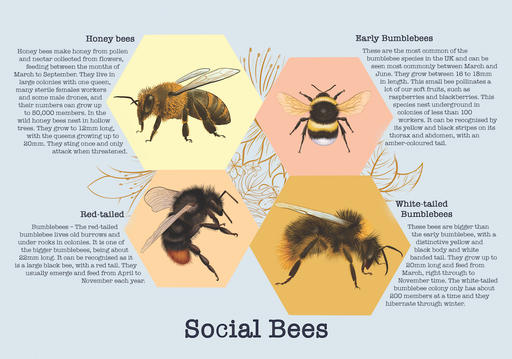 Save the Bees Leaflet Page 2
