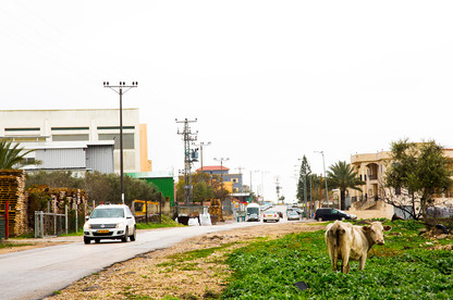 A Cow by the Unnamed road.jpg