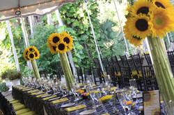 Soaring Sunflowers