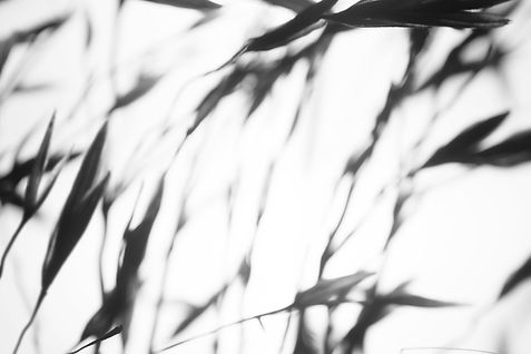 Abstract Plant Shadow Banner.jpg