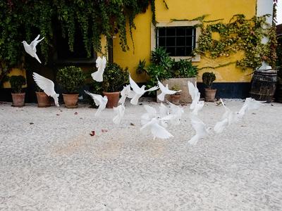 Doves at Quinta Sant'Ana