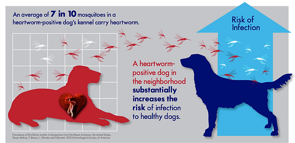 infographic-example-heartworm.png