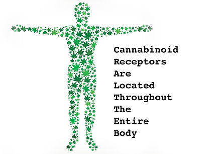 WholeBodyEndocannabinoidsFinal.jpg