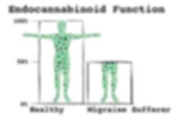 EndocannabinoidFunctionFinal2.jpg