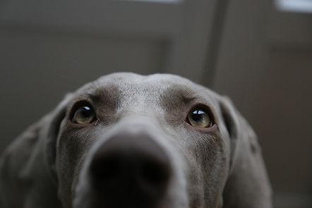 dog looking up.jpg