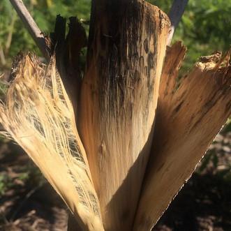hemp fibres .jpg