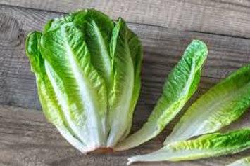 Romaine Lettuce  PER HEAD