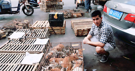 Animal Welfare in China.jpg