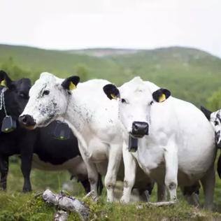 Geofence for Cattle – Advanced Electromechanics