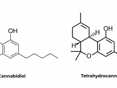 THC vs CBD -- What's the difference?