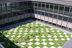 Brucker_Landschaftsbau_Dachbegrünung
