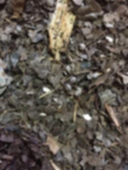 ダンゴムシやワラジムシ、ヤスデやペットローチにオススメの腐葉土『金の腐葉土』