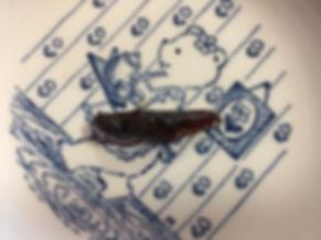 生き餌昆虫生産者が食べてみる イナゴの甘露煮缶詰 味 食感.JPG
