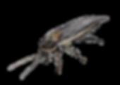 動物イラストサイトsOnO's Creationsご紹介|エキゾチックパートナーズ|