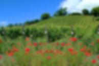 vineyard_sm1.jpg