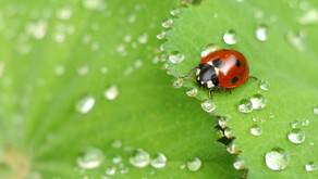 El IVIA evaluará el efecto de los insecticidas en los agentes de control biológico