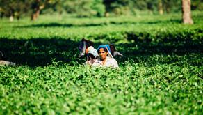 INDIA: BIOSTIMULANT PROVISIONAL REGISTRATION APPICATION DEADLINE AUGUST 2021
