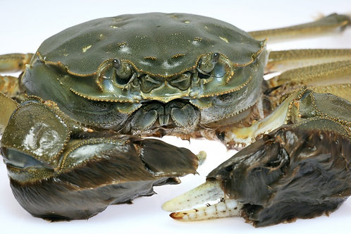 Monster Crabs