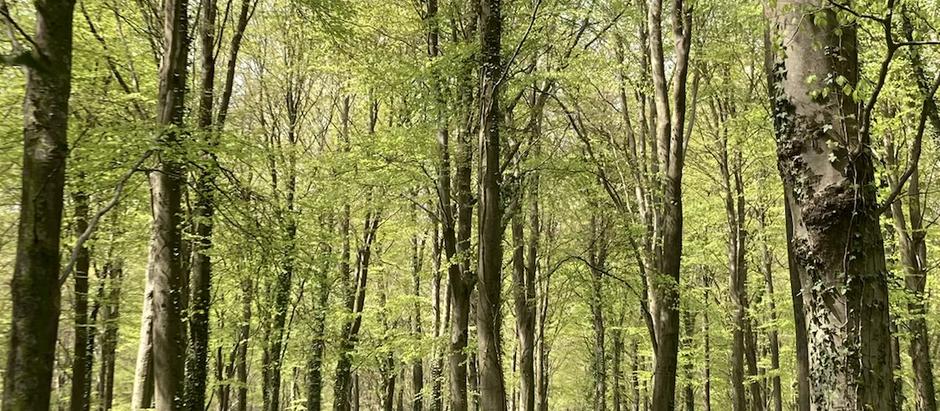 Vi è un piacere nei boschi inesplorati