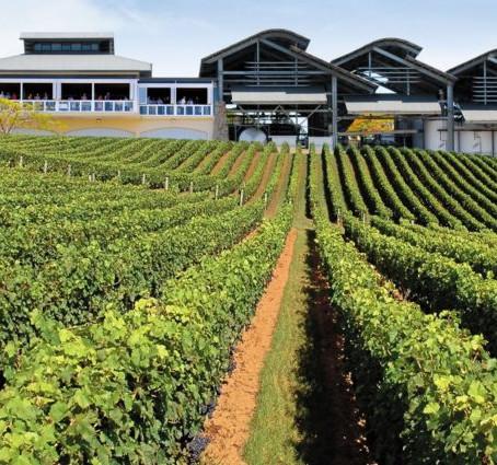 Explore Sirromet Winery