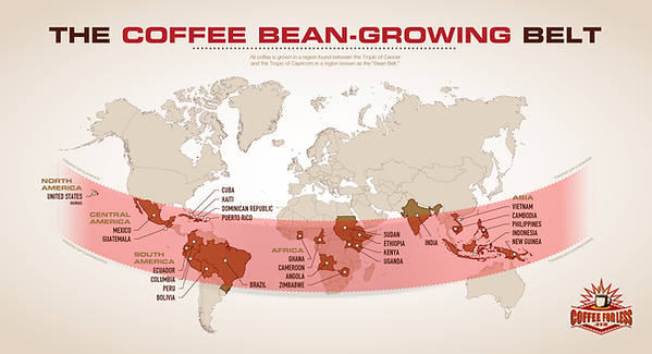coffee-bean-growing-belt.png