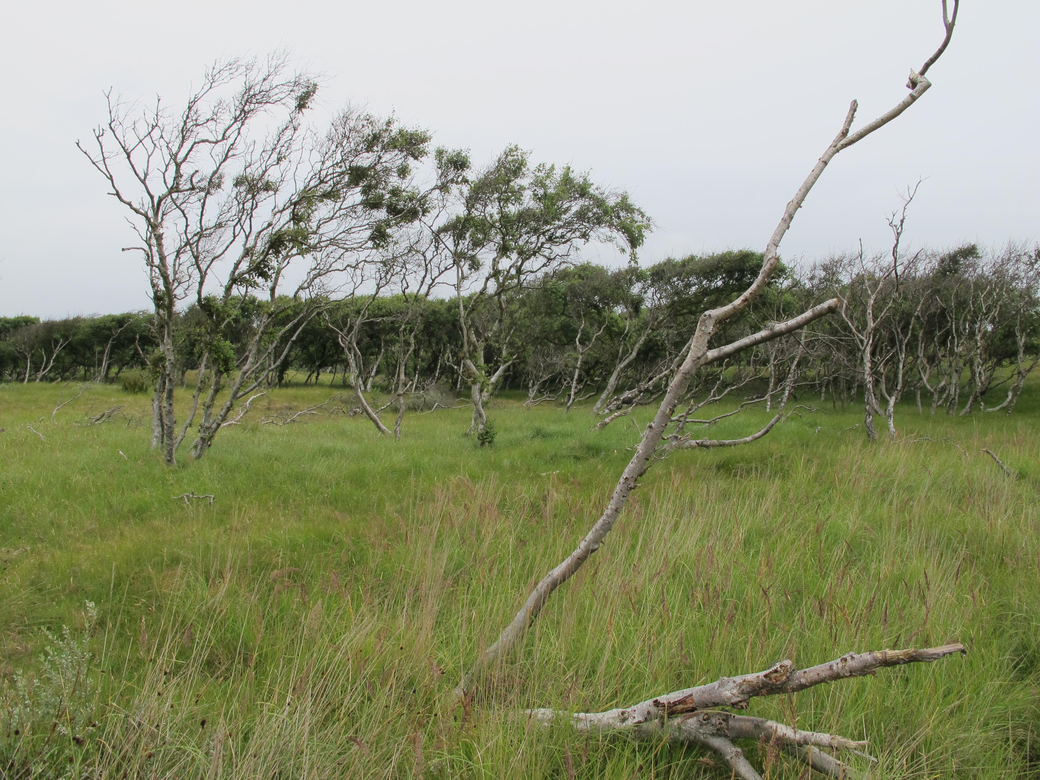 Büsche zeigen die Windrichtung an