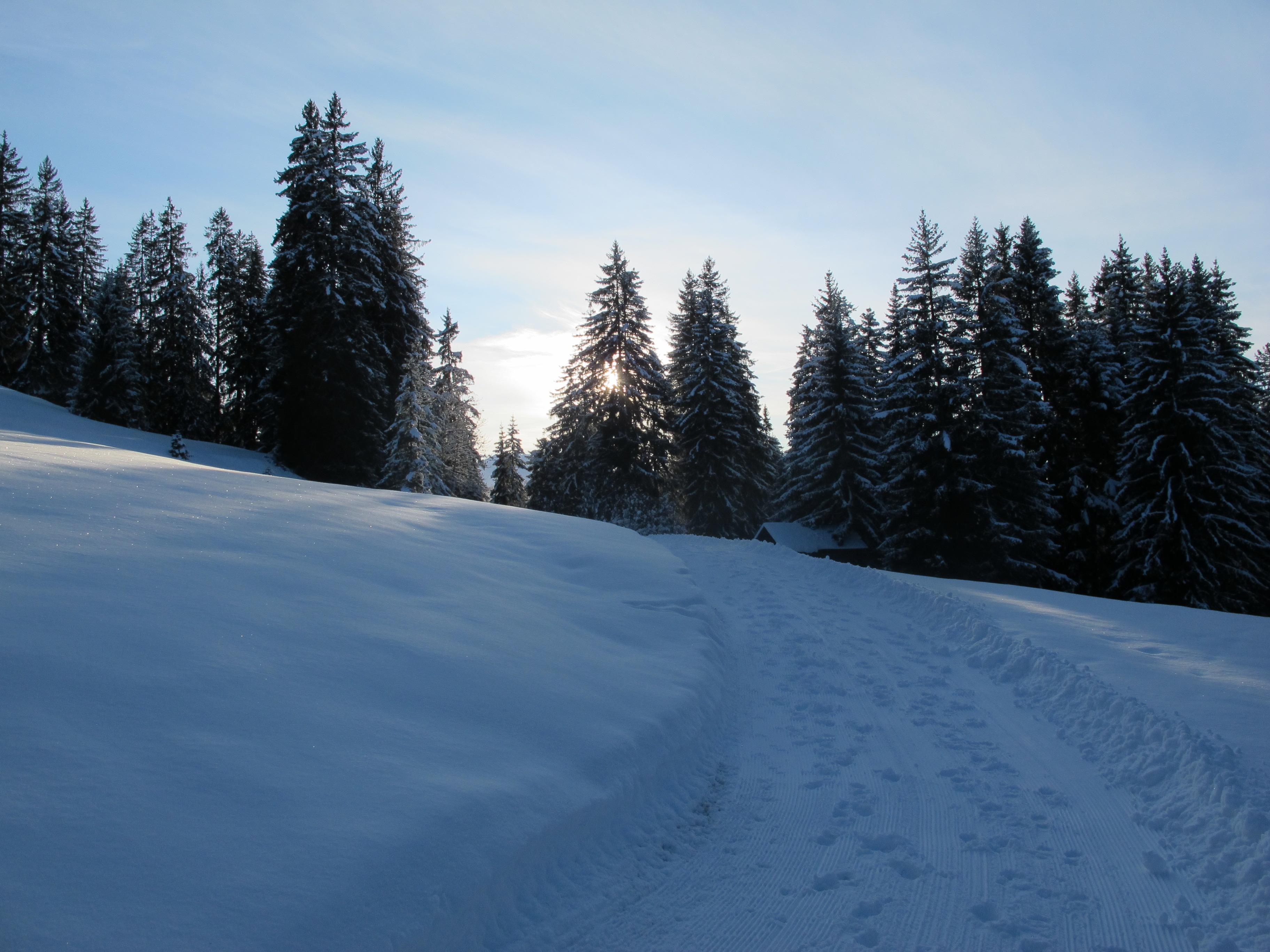 still steht der Wald ...