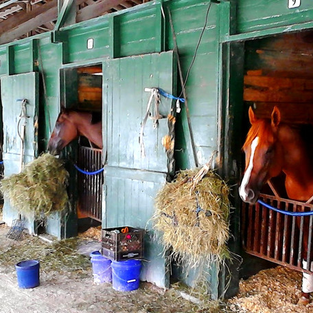 Horse Stables Fire protection Florida