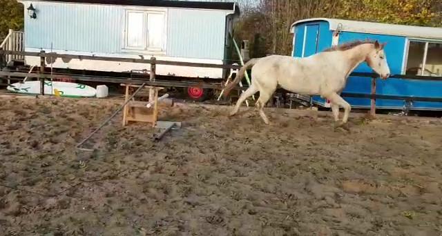 Grondwerk met de paarden