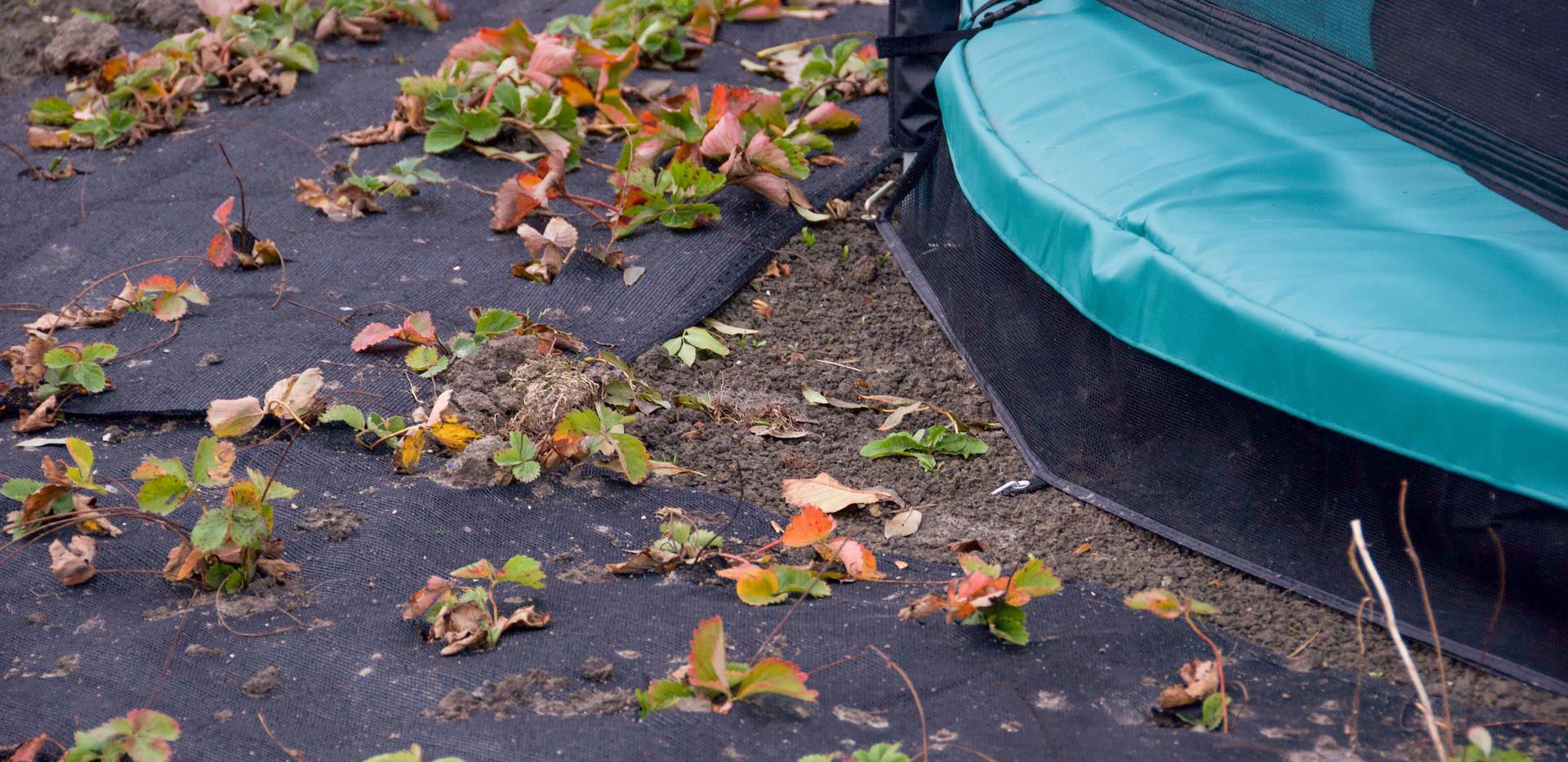 Planten naast trampoline