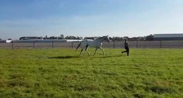 Werken met de paarden