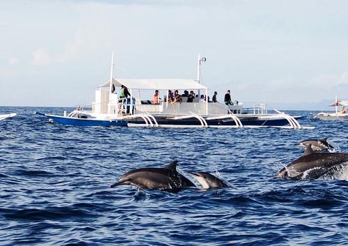 Dolphin Watching.jpg