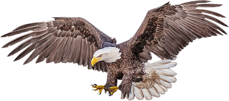 eagle3.png