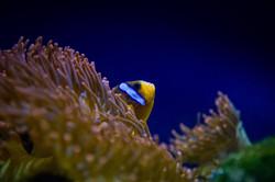 Nemo wo anders