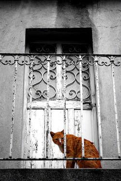 Katze vor der Tür