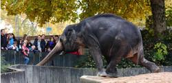 Elefantenbrücke