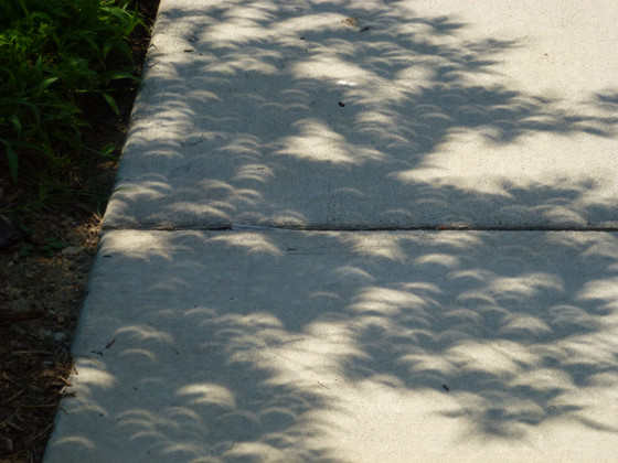 Eclipse Tree Shadows
