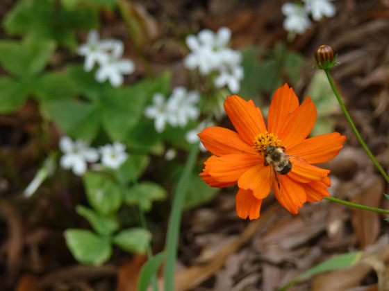 Summer Staples for Extended Bloom in the Summer Heat, Zone 7