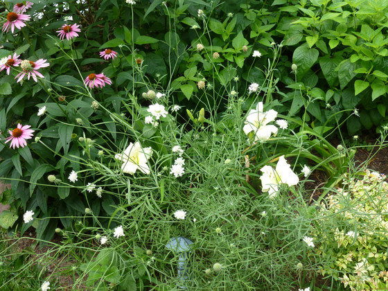Artful Combinations with Daylilies and other classics