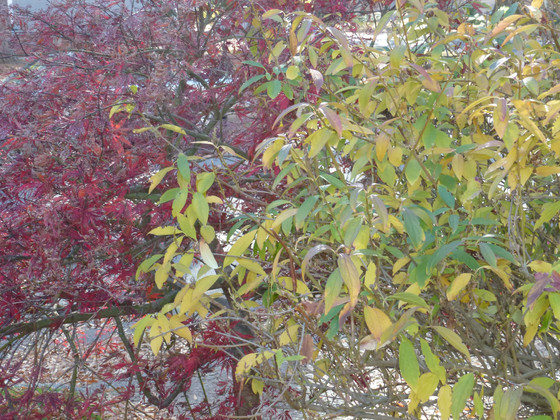 Double Duty Plants for Flowers and Fall Foliage
