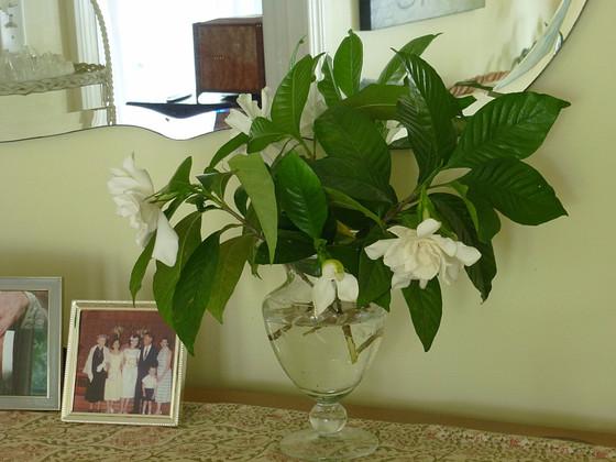 Summer Gardenias and Memories