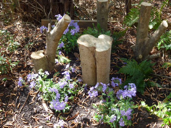 The Stumpery Border