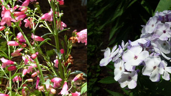 Two small additions to the garden with big impact