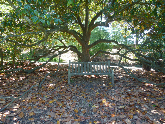 Create a Private Sitting Space with Trees